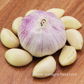 Provide Fresh Peeled White Garlic